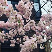 Spring is coming!  #FUMparFUM #creative #studio #travel #mood #business #spring #vibes #cherryblossom #street #life #london