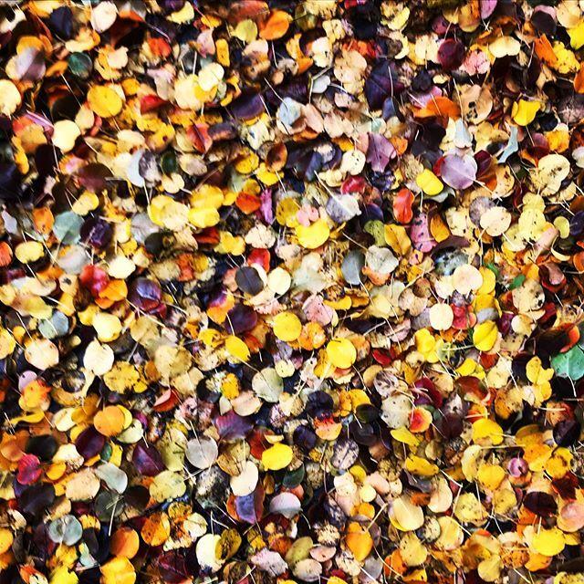 Autumn Carpet  #autumn #smell #inspiration #colors #park #FUMparFUM #creative #studio