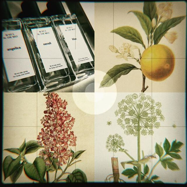 *** LT Artėja vasara! Ji jau visai čia pat. @fumparfum netrukus pristatys šiltojo sezono naujoves - trijų aromatų kolekciją WHITE ALCHEMIST.  Trys elegantiški, lengvi kvapai, kuriais malonu kvėpintis karštą vasaros dieną: Lilac (Alyva) Neroli (Karčiojo cintrinmedžio žiedai) Angelica (Šventagaršvė) *** Kvepėkime!  EN Summer is coming! Already here. @fumparfum present 3 summer fragrances for body and textile in a small WHITE ALCHEMIST collection (edp): Lilac Neroli  Angelica *** COMING SOON!  #summer #coming #soon #fragrances #eaudeparfume #neroli #lilac #angelica #niche #art #artisan #author #perfumery #handmade #limited #FUMparFUM #creative #studio